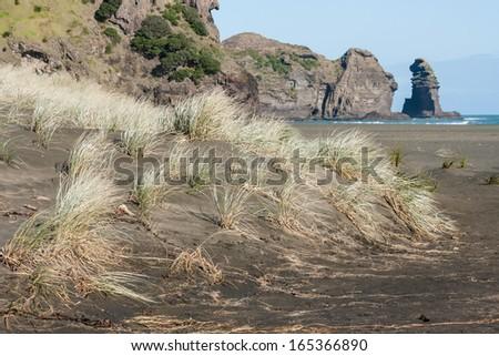 grass growing on sand dunes at Piha beach - stock photo