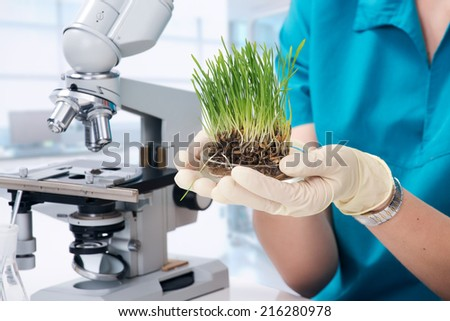 Grass grown in the laboratory - stock photo