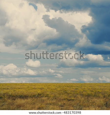 grass grows on the field against the blue sky with clouds