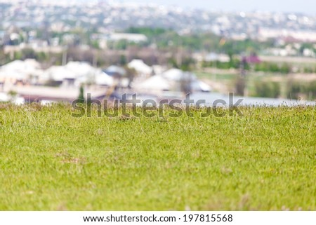 grass in a clearing in city - stock photo