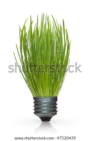 Grass in a lamp cap on a white background - stock photo