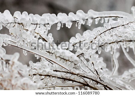 grass in ice - stock photo