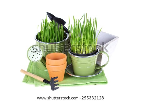 Grass in pot and garden tools isolated on white  background. Gardening concept.  - stock photo