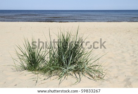 Grass in sand. - stock photo