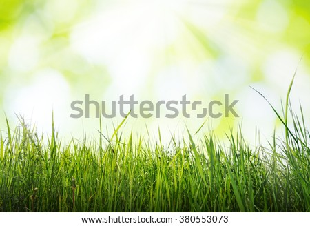grass in sun light with blurred background