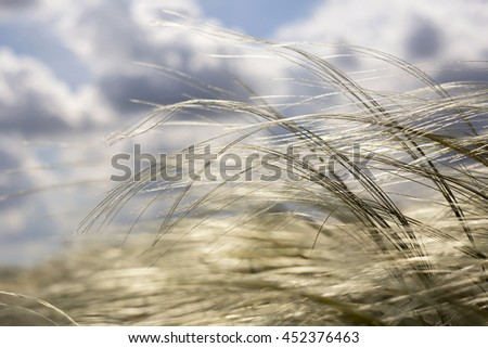 Grass in the air - pollen and allergy concept