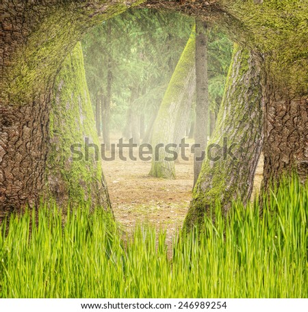 Grass in the Forest - stock photo