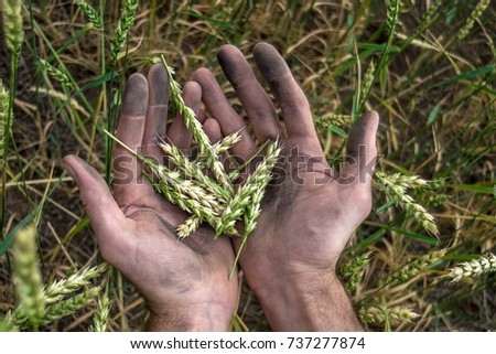 grass in the hands of a farmer
