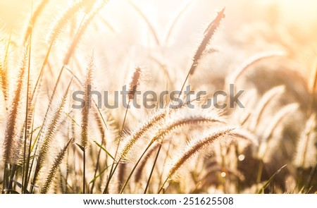 Grass in the meadow and sunset - stock photo
