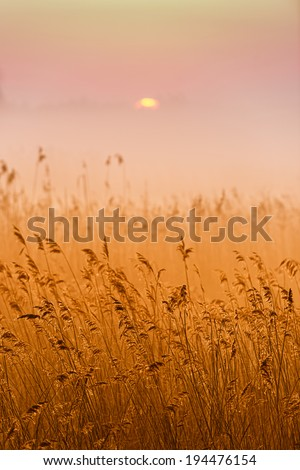 Grass in the morning fog abstractly blurred background. Shallow depth of field