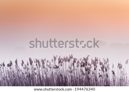 Grass in the morning fog abstractly blurred background. Shallow depth of field - stock photo