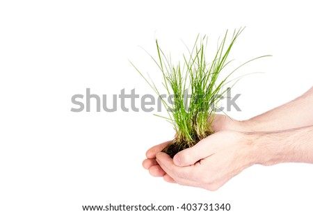 grass in the soil in female hands on a white background - stock photo