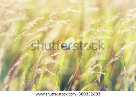 Grass in the sun, butterfly perched on a stalk of grass