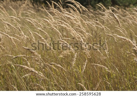 Grass in the sunlight - stock photo