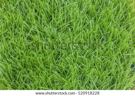 Grass is a biennial multi-currency, multi-layer Liliopsida family Poaceae or Gramineae family is well known that such grass (Imperata cylindrica Beauv.) Grass crow's feet.