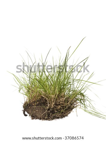 Grass isolated on a white background - stock photo