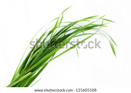 grass isolated on white - stock photo