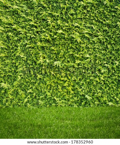 Grass lawn on hedge background - stock photo