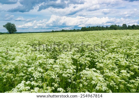 Grass Lawn Plain Nature  - stock photo
