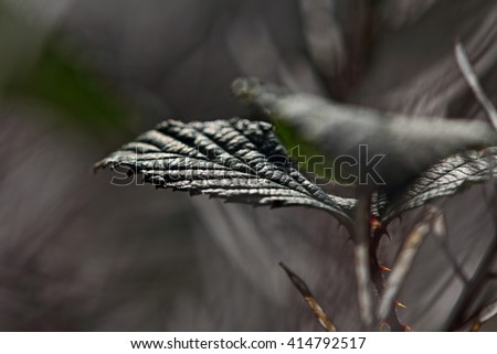 Grass, leaves, close up, local focus, HDR image(High Dynamic Range)
