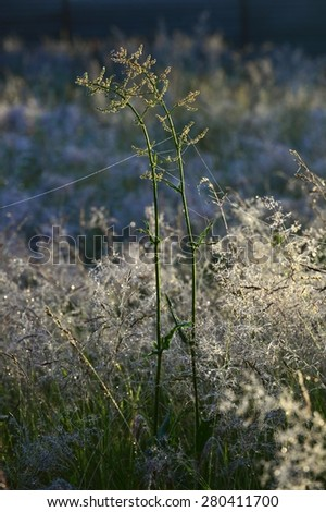 Grass lit by the sun against an autumn meadow background. Plants in deep forest day time rays   - stock photo