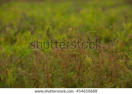 Grass Meadow Close-Up With Bright Sunlight. - stock photo