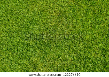 Grass meadows top view. - stock photo