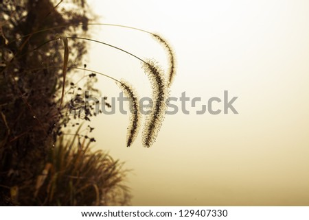 grass near lake with mist in the morning - stock photo