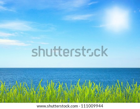Grass near sea on sunny day with blue sky - stock photo