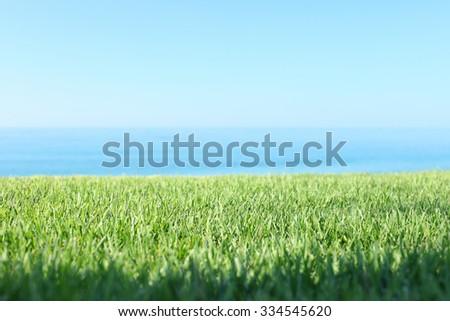 Grass near sea on sunny day with blue sky - stock photo