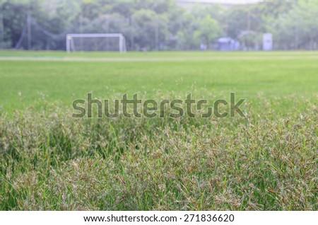 grass of football field - stock photo
