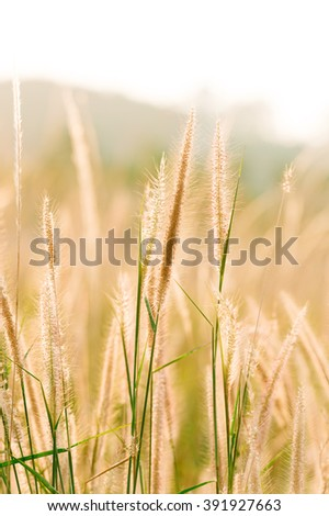 Grass of light