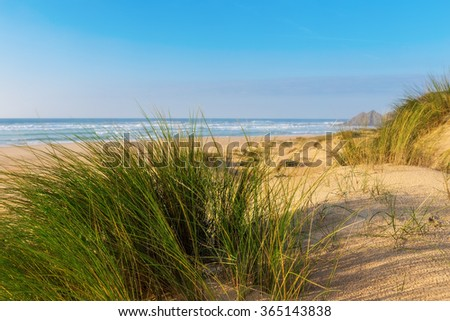 Grass on a background of blue sea. Romantic landscape. - stock photo