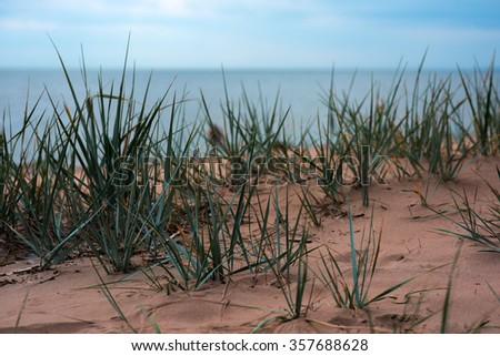 Grass on a sand dune against Baltic sea - stock photo