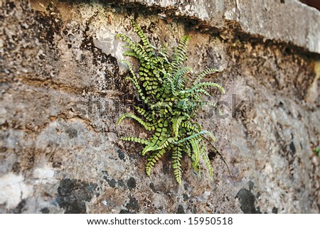 grass on a stone wall