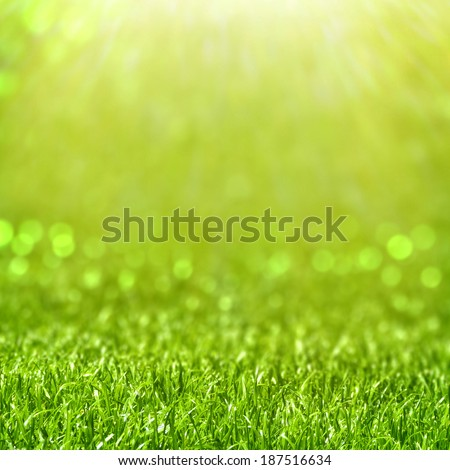 Grass on bokeh background with sunlight - stock photo