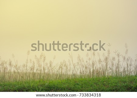 grass on fog in the morning