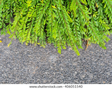 grass on footpath side - stock photo