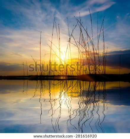 grass on sunset sky background over lake - stock photo