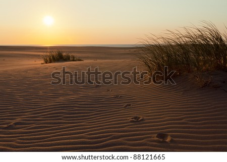 grass on the beach - stock photo