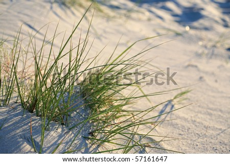 Grass on the beach.Holiday background.