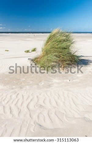 Grass on the beach with sand patterns