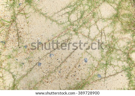 Grass on the desert top view, lawn in bad condition and need maintaining - stock photo