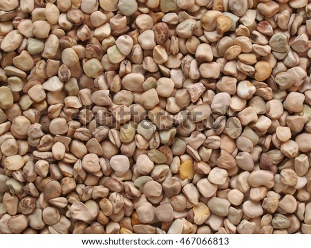 Grass pea (Lathyrus sativus) aka sweet pea, chickling pea, Indian pea, white pea, cicerchia pea vegetables vegetarian food useful as a background