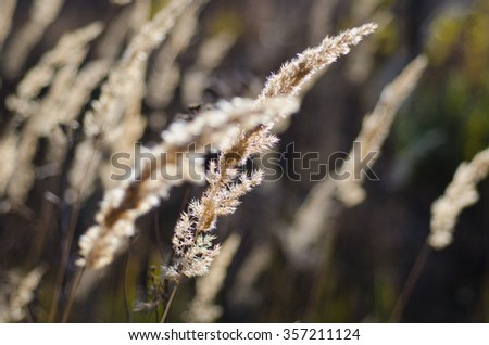 Grass, plants, dry plants, field grasses, Field, Dry grass, Nature, Wildlife