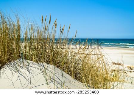 Grass sand dune beach sea view, Leba, Baltic Sea landscape, Poland, nature backgrounds - stock photo