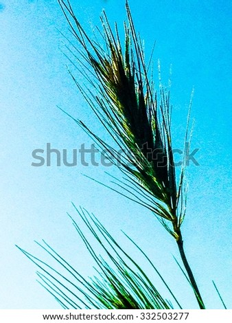Grass seed against the blue sky