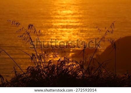 Grass silhouette along ocean coast - stock photo