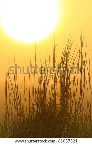 Grass silhouette at sunrise and morning mist - stock photo