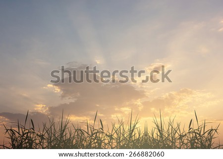 grass silhouette with sky sunset - stock photo